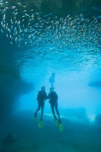 Curacao_Mar06_2488