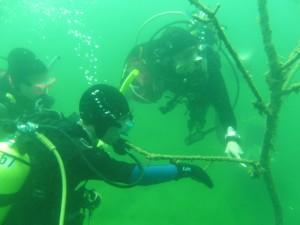 Quarry Divers